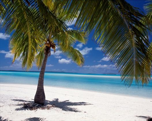 Aitutaki - Palm Trees on the Beach at One Foot